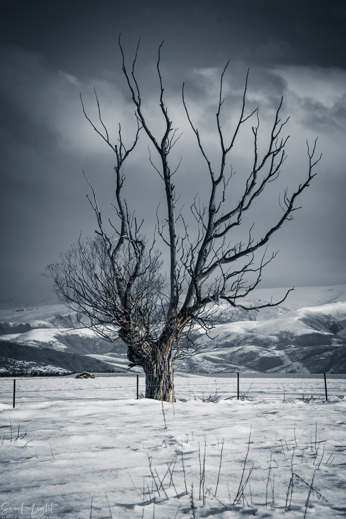 Withstanding the Cold - Mackenzie Country