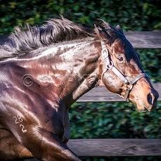 Stallions Thoroughbred
