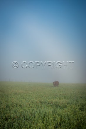 fogbow May 28 2020_00001
