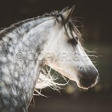 Stallions Non-Thoroughbred